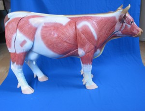 Sculpture model of cow (SMRL10)No.2